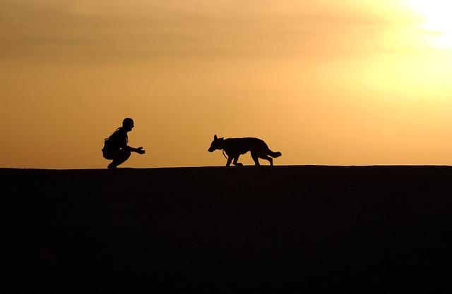 silueta muže a psa