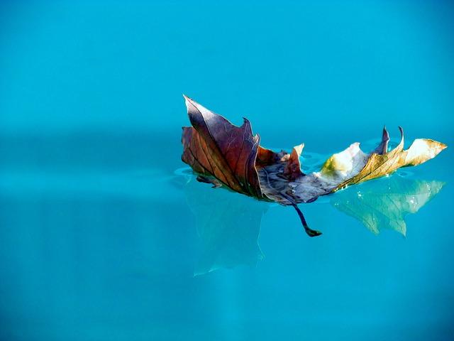 list na hladině bazénu podzim.jpg
