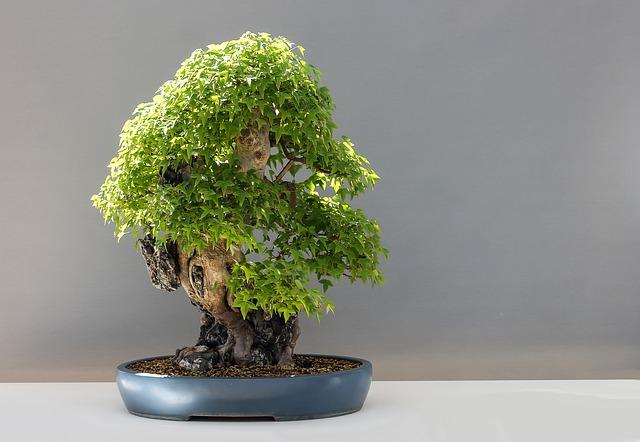 bonsaj v nádobě