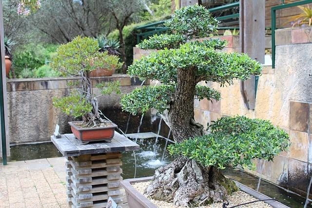 bonsaje na terase